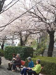 4月 お花見